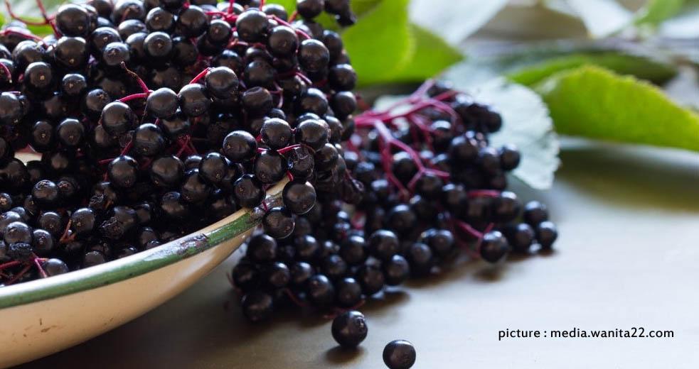 acai berry, manfaat acai berry, trace slim, detox natural, menurunkan berat badan, pedamping diet, diet sehat alami,