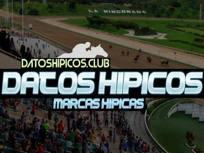DATOS HIPICOS | MARCAS HIPICAS【2021】
