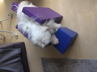 tratamento e cuidado com cães paralisados