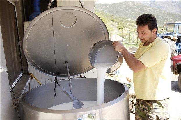 Ενίσχυση για το σύνολο του γάλακτος που παράγεται στα μικρά νησιά του Αιγαίου ζητά ο Σύνδεσμος Ελληνικής Κτηνοτροφίας