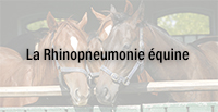 La Rhinopneumonie équine