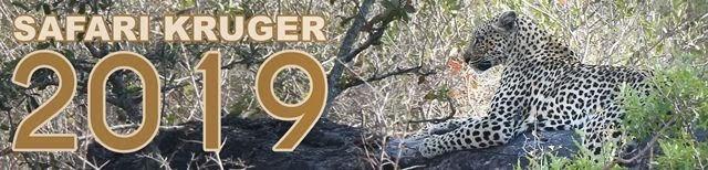Safari-por-libre-Kruger-2019