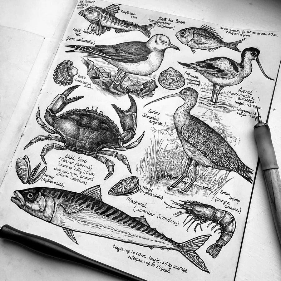 03-Birds-fish-and-crustaceans-Philip-Harris-www-designstack-co
