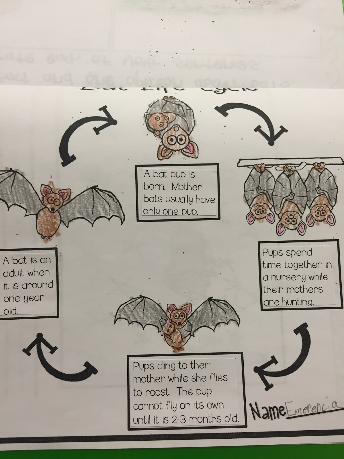 Miss Vanchu S Classroom Blog Second Grade Goes Batty