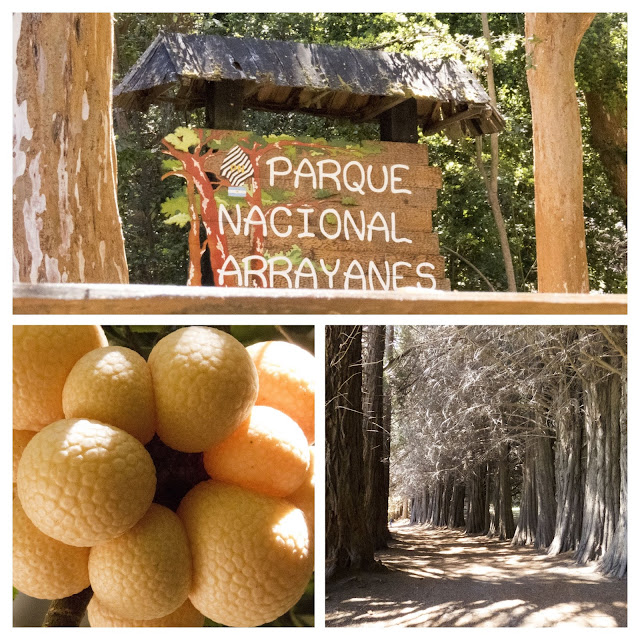 What to do in Bariloche: Collage of forest pictures from Parque Nacional Arrayanes