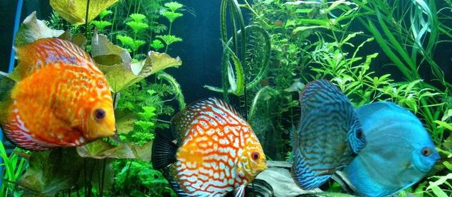 Jenis Ikan Hias Air Tawar Air Laut yang Mudah Untuk Dipelihara