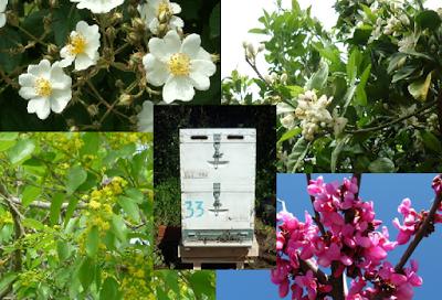 Τι λέει η ζυγαριά Bees Scale τον Απρίλιο
