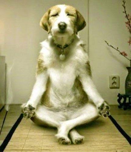 cachorro ioga
