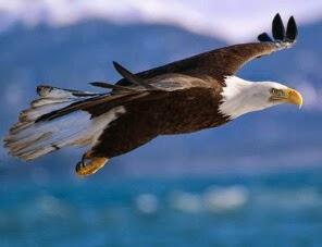 Gambar Pp Dp Bbm Wa Burung Elang Aneh Lucu Gokil