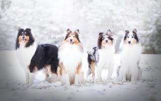 Köpek Resimlerinden sevimli köpek resimleri, komik köpek resimleri, şirin köpek resimleri, küçük köpek, tatlı köpek, yavru köpek, köpek cinsleri, en tatlı köpek resimleri benzeri konulardaki en güzel köpek resimleri ni sizler için derledik, birbirinden güzel köpek resimlerine ulaşabilirsiniz.