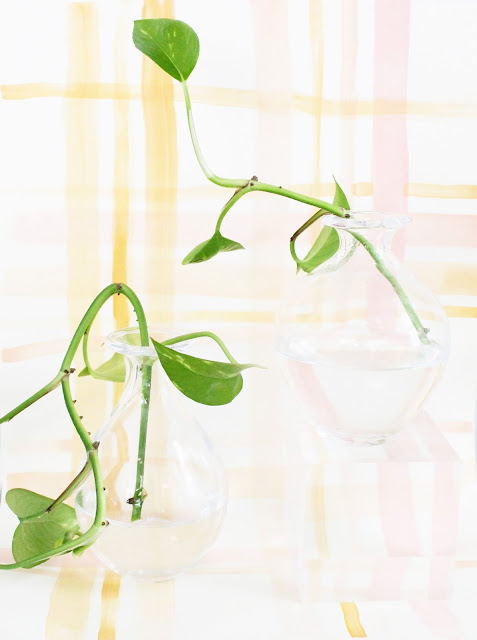 Propagating Philodendron