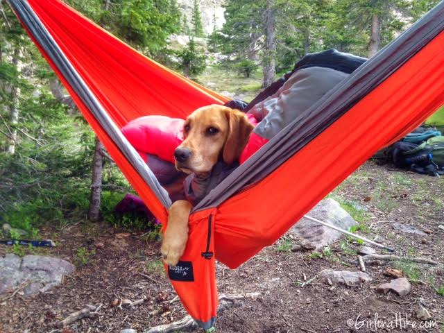 Kroex Double Hammock, dogs in hammocks