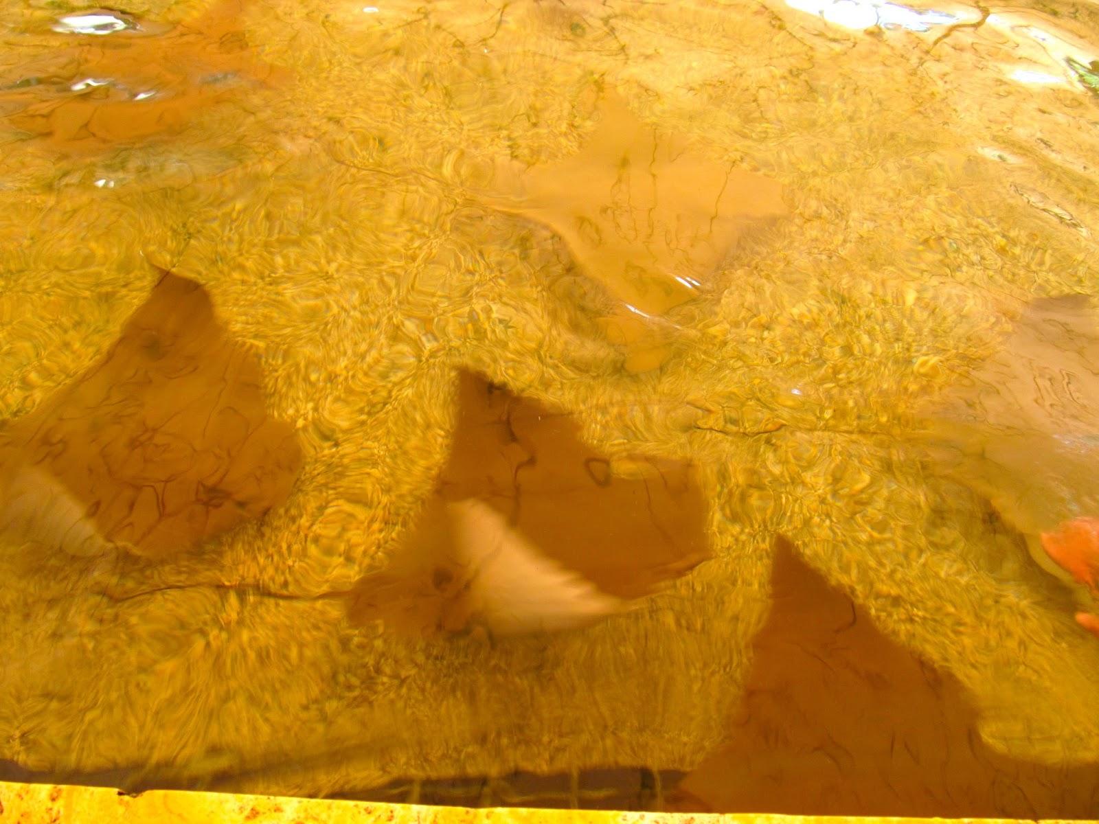 Stingrays at Miami Seaquarium, FL - ouroutdoortravels.blogspot.com