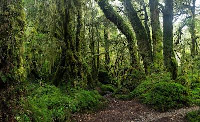 https://laderasur.com/fotografia/el-bosque-encantado-en-el-parque-nacional-queulat/