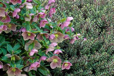 plants, flowers,