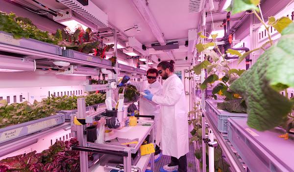 Cultivos en el espacio exterior - Las Mejores Ideas de Negocios e Innovaciones del Año