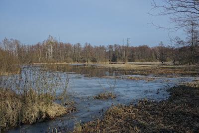 szlak czarny: roztopy na rozległych łąkach