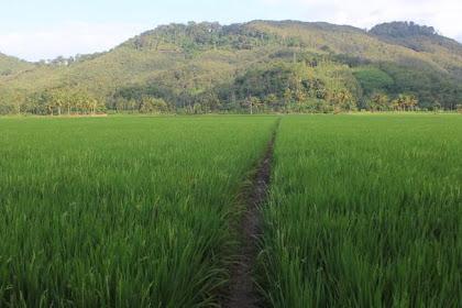 KBKPH Banjar Optimalkan Patroli Demi Antisipasi Perusakan Gunung Sungkur
