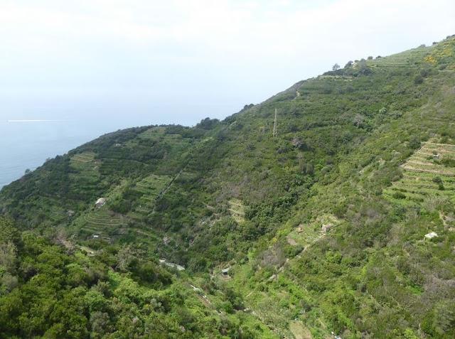 panorama sui vigneti terrazzati di Riomaggiore