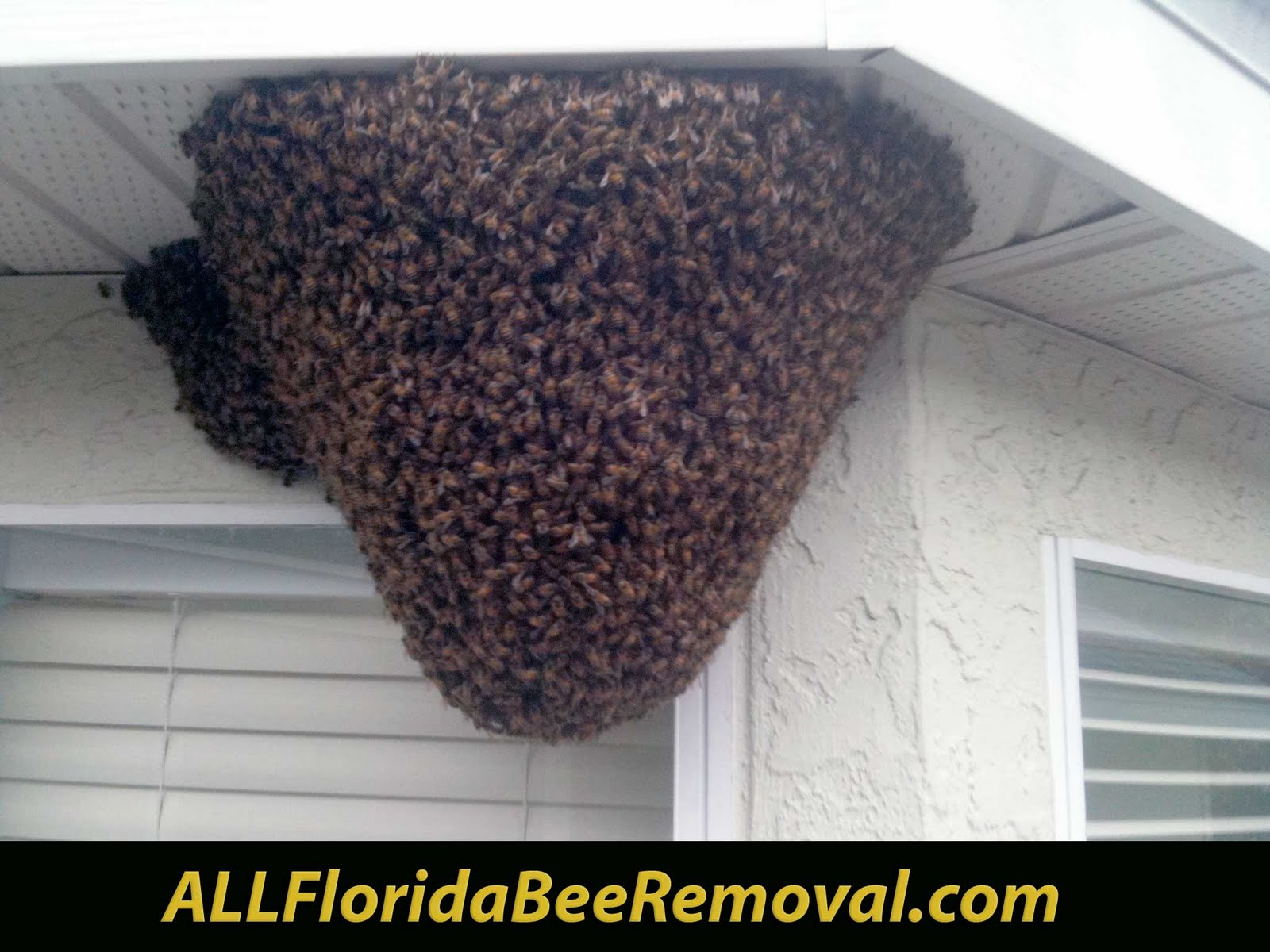 ALL Florida Bee Removal Blog: Need FREE Bee Removal? We are looking for HUGE  Killer Bees & Yellow Jacket nests