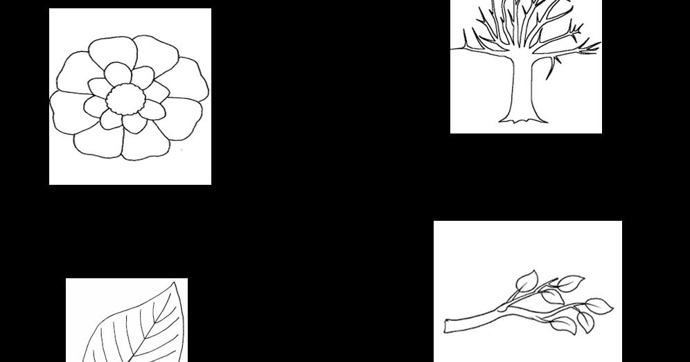 maestralucia  le parti della pianta per lapbook