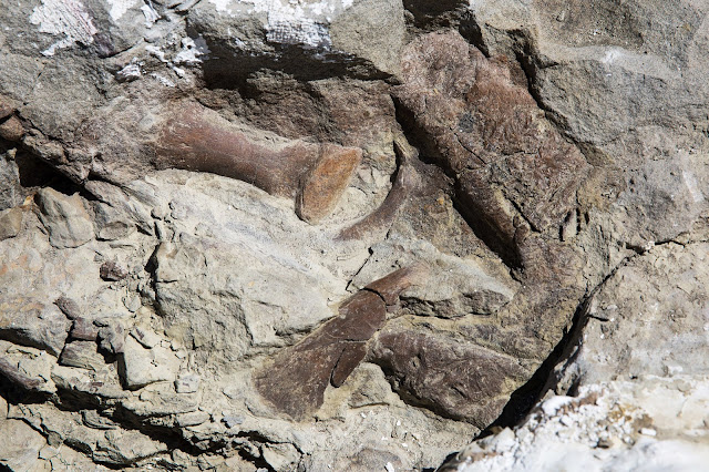 New tyrannosaur fossil is most complete found in Southwestern US