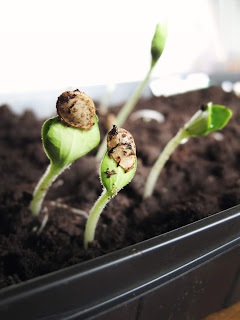 Green sprouts popping out of dark soil. Photo by Jen Theodore on Unsplash.