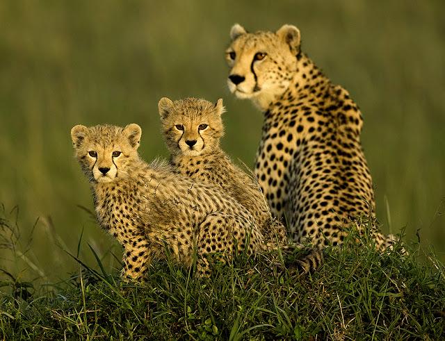 lợi ích mà sinh vật hoang dã đem lại