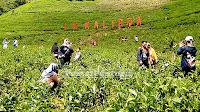 Manajemen wisata agro kebun teh Kaligua bantah ada karcis parkir ganda