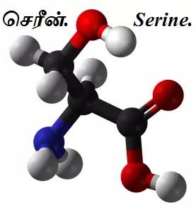 அமினோ அமிலங்கள் - Amino Acids - Part 4.