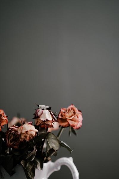 Coge-la-flor-y-fotografiarla-en-un-interior
