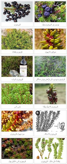 کوکبری کے صحت سے متعلق فوائد | kokbari ke sehat se mutaliq fawaid