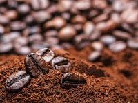 Proses Pengolahan Pasca Panen Biji Kopi, dari Full Wash Hingga Honey