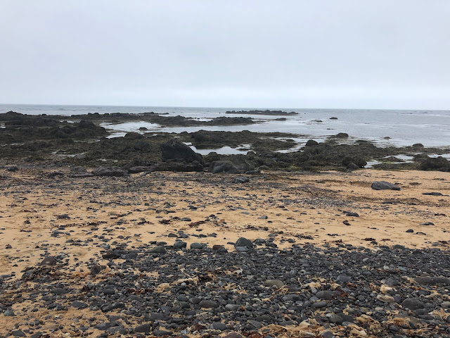 Ytri Tunga Beach in Iceland where you can see seals in June and July!