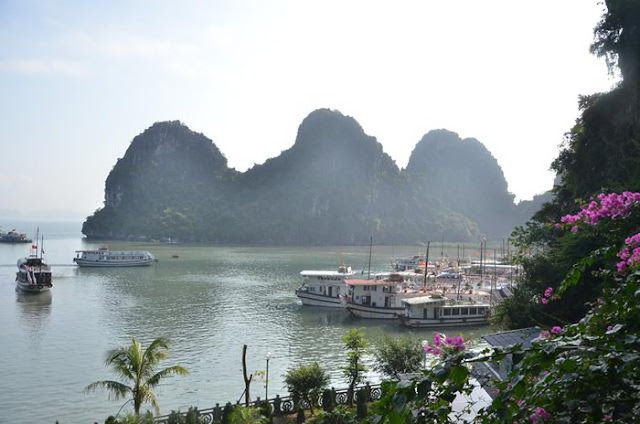 Hoạt động du thuyền đưa khách thăm quan Vịnh Hạ Long