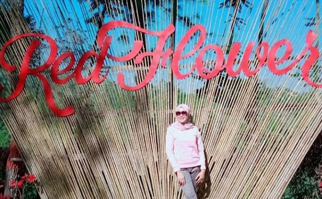 bukit red flower puspo pasuruan, tiket masuk red flower puspo pasuruan, harga tiket masuk red flower puspo pasuruan, htm bukit red flower pasuruan, lokasi red flower puspo pasuruan, alamat red flower puspo pasuruan, wisata baru pasuruan, forest bromo