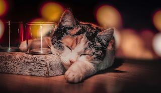 ¿Los gatos tienen pesadillas?