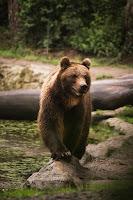 poslovicy-pogovorki-medved