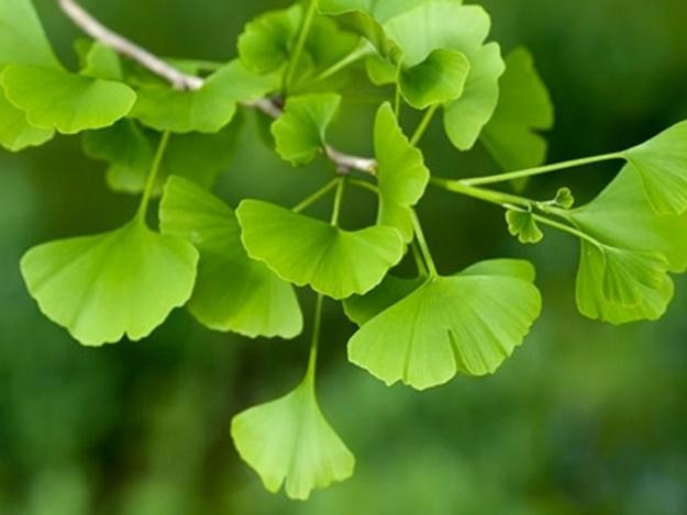 Macam Macam Tanaman Herbal untuk Mengatasi Disfungsi Ereksi
