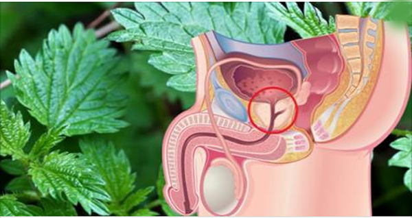 A SINGLE LEAF OF THIS PLANT TURNS YOUR PROSTATE DOWN AND ELIMINATES DIABETES!