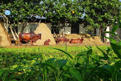 Khung cảnh bình yên tại Nông trại hữu cơ (ảnh: Nông trại Hải Vân - Sân Chim Vàm Hồ)