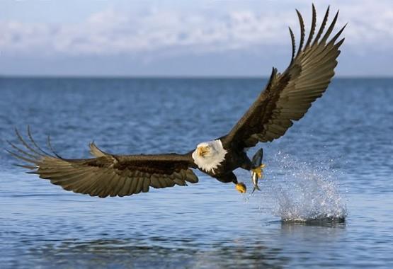 6600 Koleksi Gambar Hewan Darat Laut Udara Terbaik