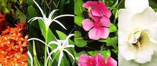 Persebaran Flora di Permukaan Bumi