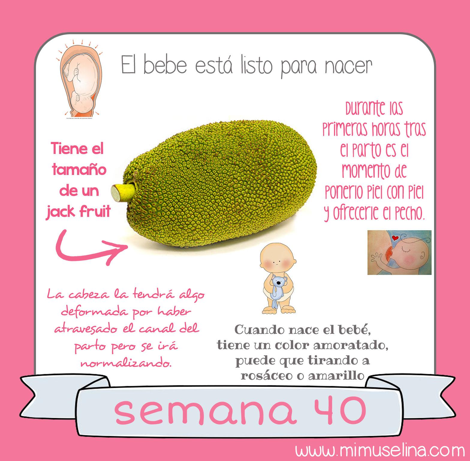 Medidas de bebe de 24 semanas de gestacion