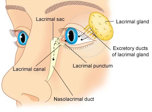 Lacrimal Apparatus Gross Anatomy Lacrimal Gland Dr Abhimanu