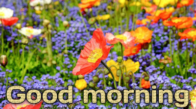 Morning flowers images