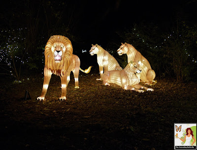 Illuminated Pride of Lions Bronx Zoo Holiday of Lights 2019 NEW