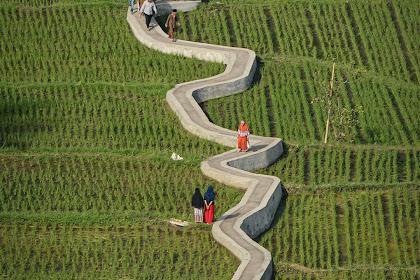 Viral! Objek Wisata Jalan Setapak di Ngarai Sianok Bukit Tinggi Sumatera Barat