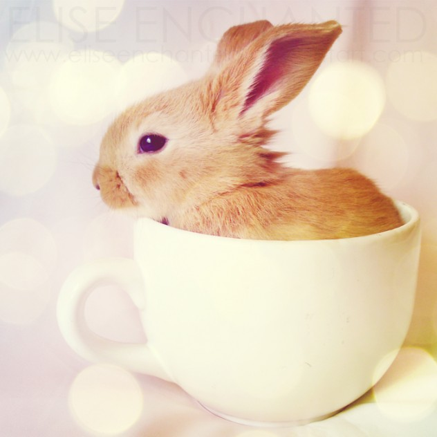 23 Adorable Baby Animals In Cups Amazing Creatures