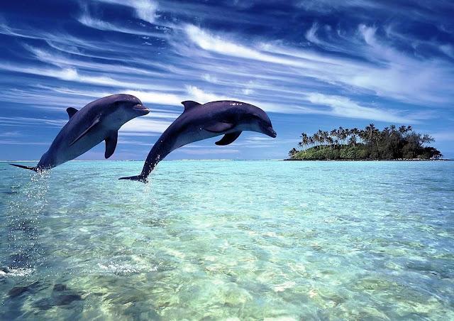 Фоновая картинка для блога Настин уголок - прыгающие дельфины в море